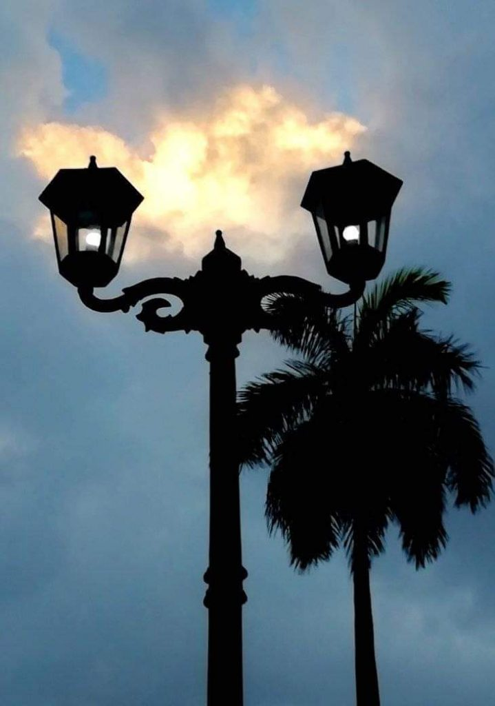Palma Real y farola
