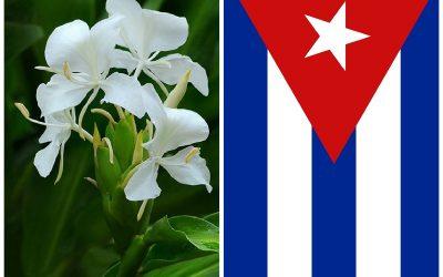 ¿Cómo llegó la «extranjera» mariposa a ser la Flor Nacional de Cuba? (viejas historias habaneras)