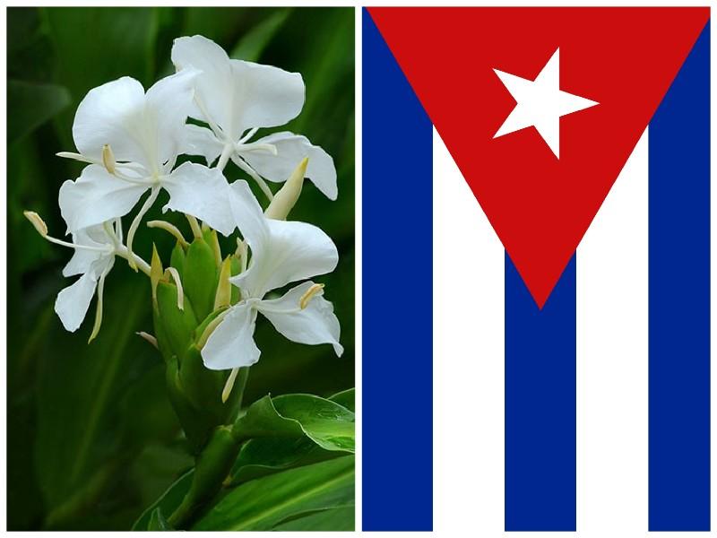 Mariposa Flor Nacional de Cuba