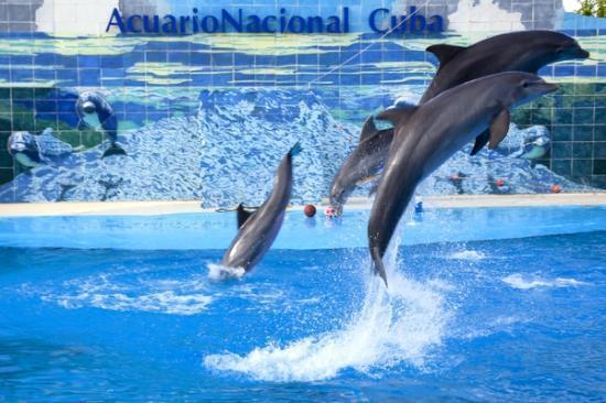 acuario Nacional de Cuba Show